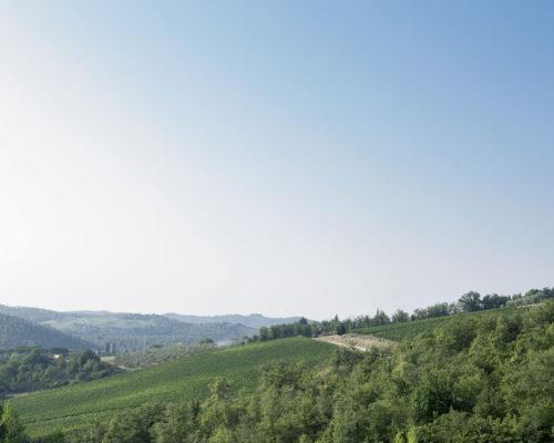 Vigna Cavarchione